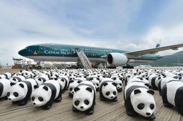 Cathay plane and panda